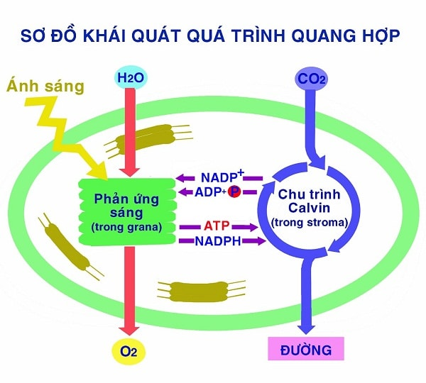 nhung-phan-ung-Hoa-hoc-thu-vi-xay-ra-trong-doi-song-hang-ngay-1