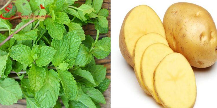 Trị quầng thâm ở mắt bằng lá bạc hà và khoai tây