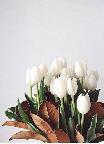 Hoa Tulip lời cầu xin tha thứ