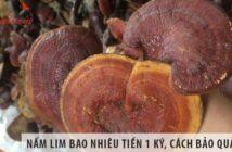 Nấm lim bao nhiêu tiền 1 ký, cách bảo quản nấm khỏi mối mọt?